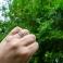 AQUAMARINE SARITA Silver Ring
