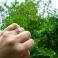GREEN SARITA Silver Ring